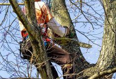 Tree Trimming Services for Your Home